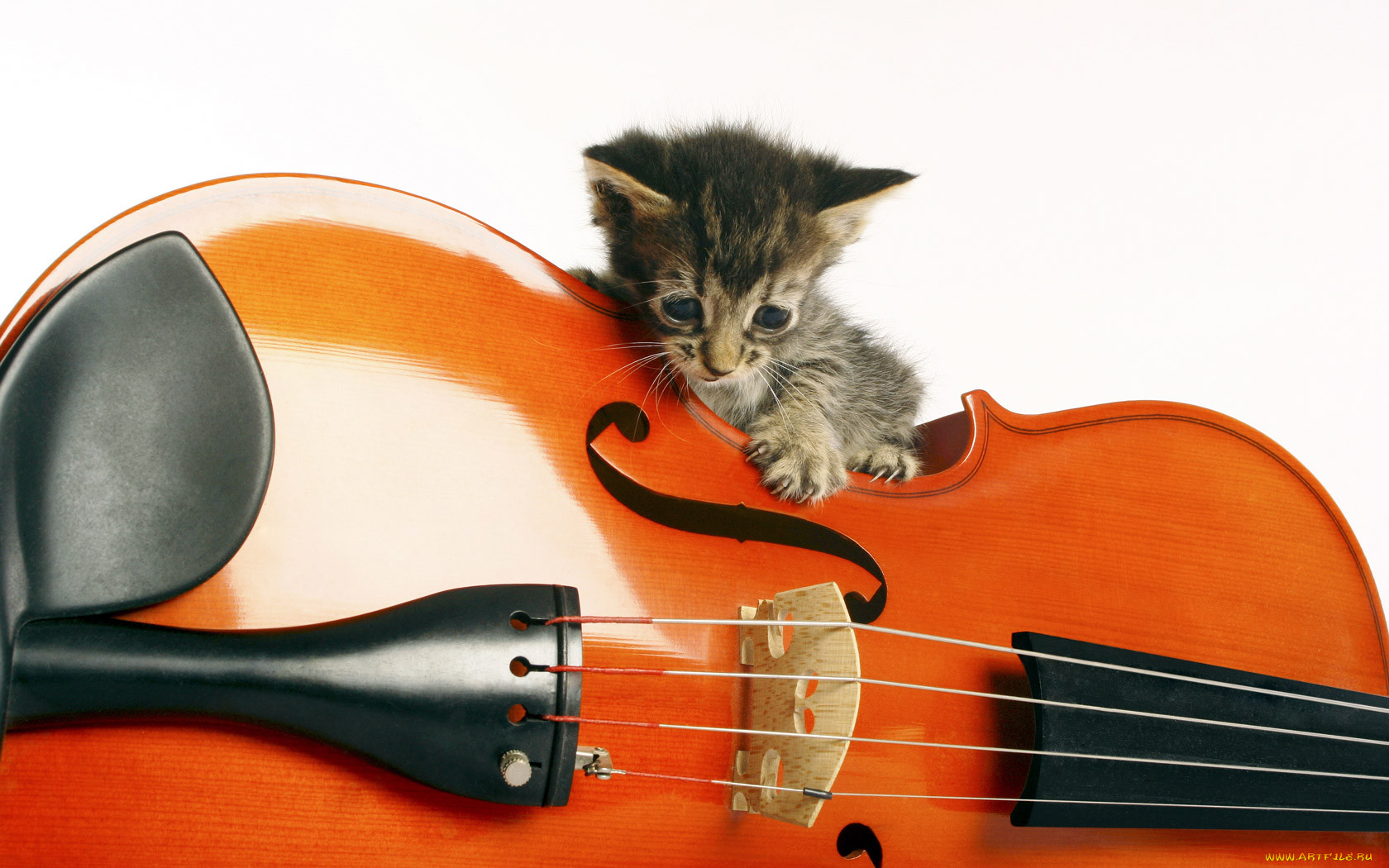 Картинки котят с гитарой